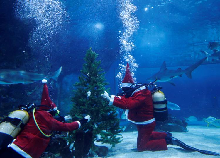 水族館でもクリスマスをお祝い サメの水槽にサンタがツリーを飾る