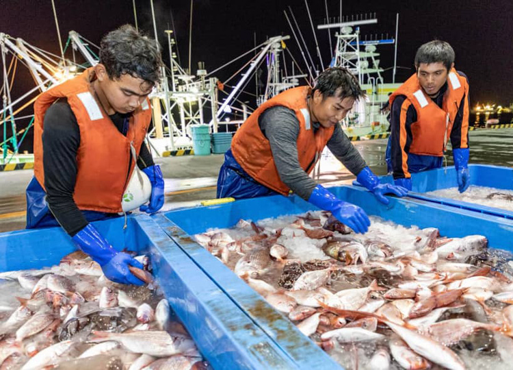 Indonesian workers who came to Japan on intern trainee visas examine fish in September at Ishinomaki port in Miyagi Prefecture.