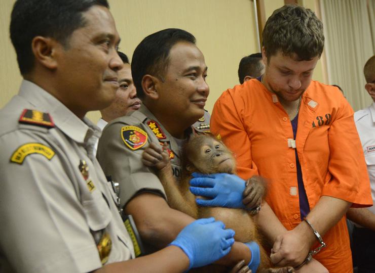 オランウータン密輸しようとしたロシア人、インドネシア当局が逮捕