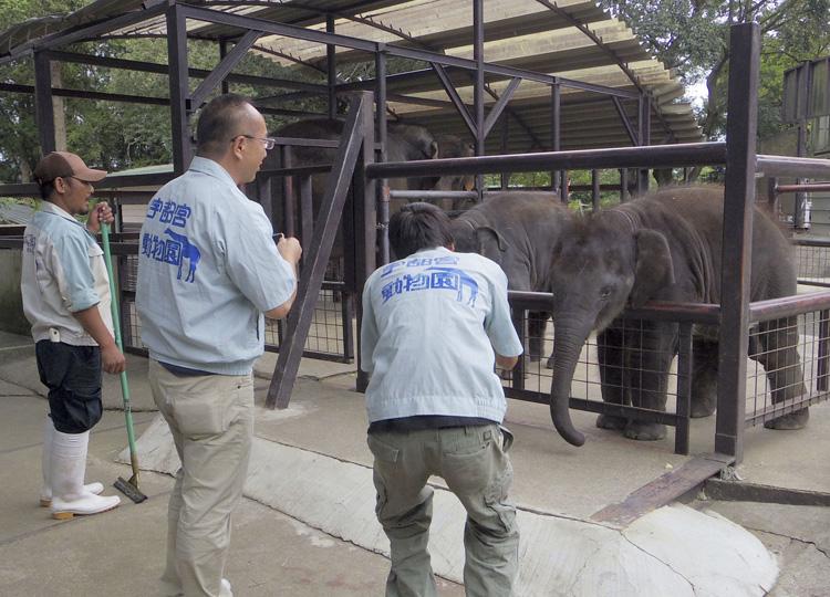 「市原ぞうの国」で子ゾウにリンゴを与える宇都宮動物園の職員ら