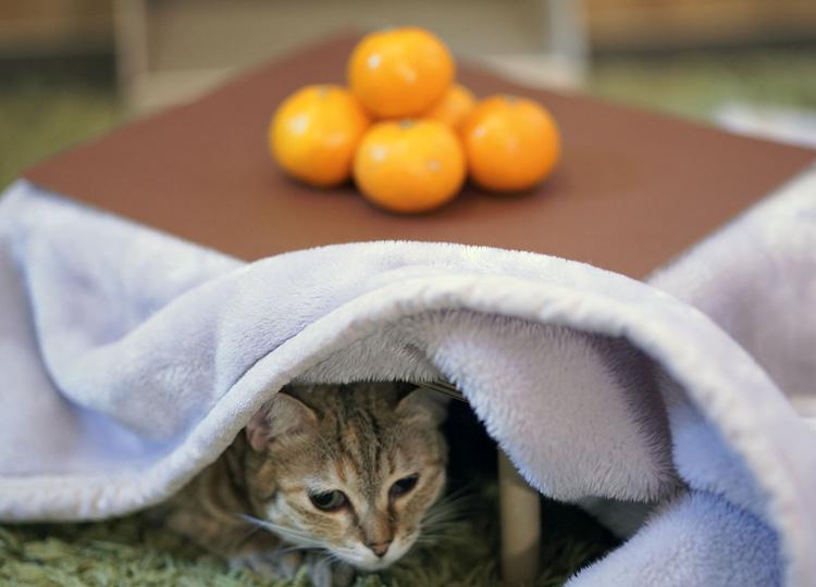 ネコがこたつやミカンで遊ぶ写真をSNS に投稿すると、お金が寄付される仕組みだ。