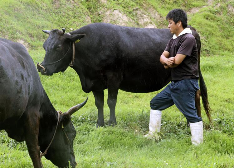 和牛遺伝子の保護へ法整備 受精卵などの不正利用差し止め