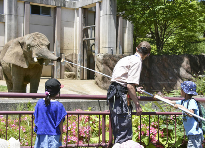 Visitors to Iwate zoo help 18-year-old elephant lose weight through exercise
