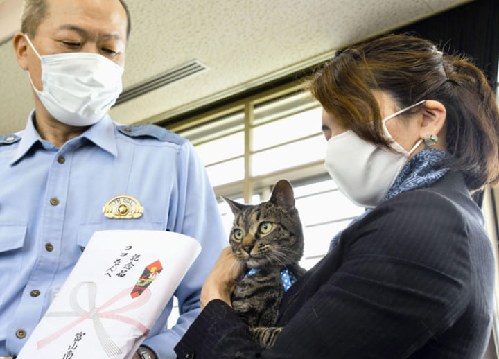 Cat helps rescue man lying down in canal; Toyama police reward it with cat food