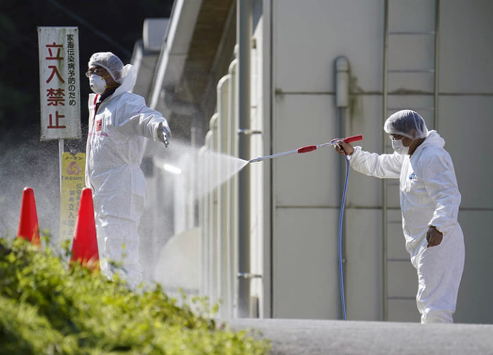 Culling of 330,000 chickens begins after bird flu confirmed in Kagawa