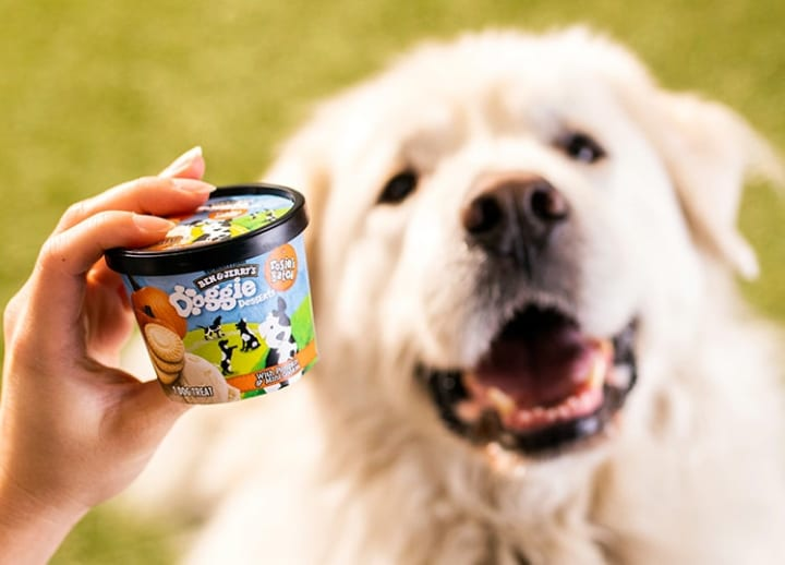 Doggie desserts: Ice cream company Ben & Jerry's enters pet food business