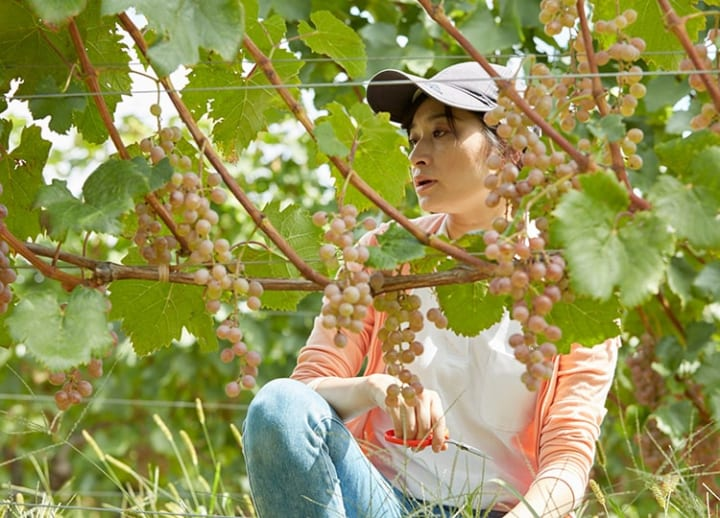 Finding Japan in a glass of Koshu wine