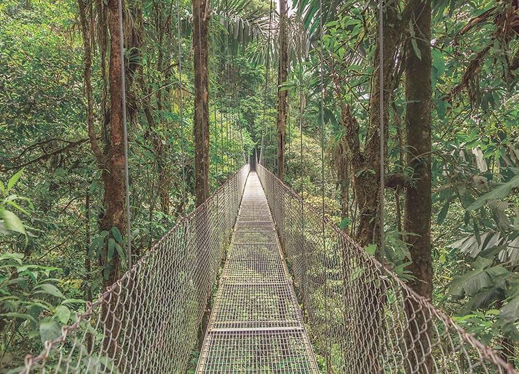 コスタリカ・モンテベルデ自然保護区
